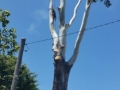 Tree on Powerlines