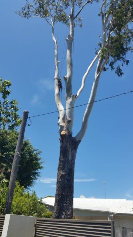 Tree on Powerlines